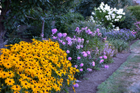 Color abounds in the borders by Nyce Gardens