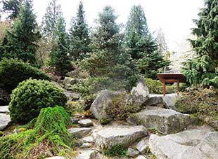 The BBG Rock Garden has a fabulous display of conifers suitable for home gardens.